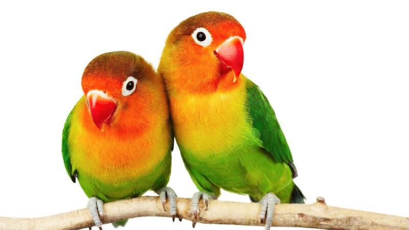 Um das Vertrauen seiner Vögel gewinnen zu können, muss man besonders behutsam vorgehen - Schritt für Schritt kann man sich ihnen annähern