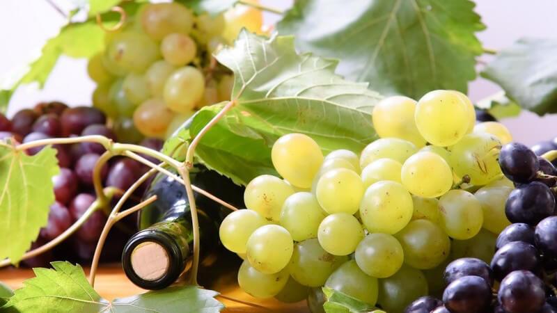 Beschreiben z.B. unterschiedliche Zugaben, Erntezeiten und Traubenarten