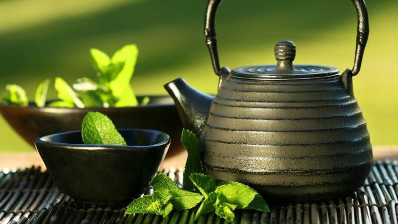 Wissenswertes zum Oolong Tee