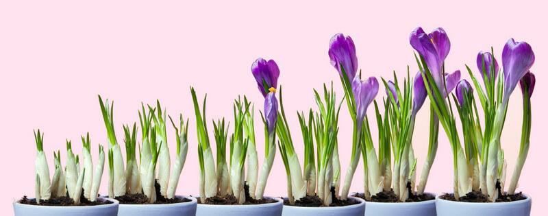 Damit Pflanzen wachsen und gesund bleiben, ist die richtige Pflege entscheidend - für Menschen ohne grünen Daumen gibt es Pflanzen ohne große Ansprüche