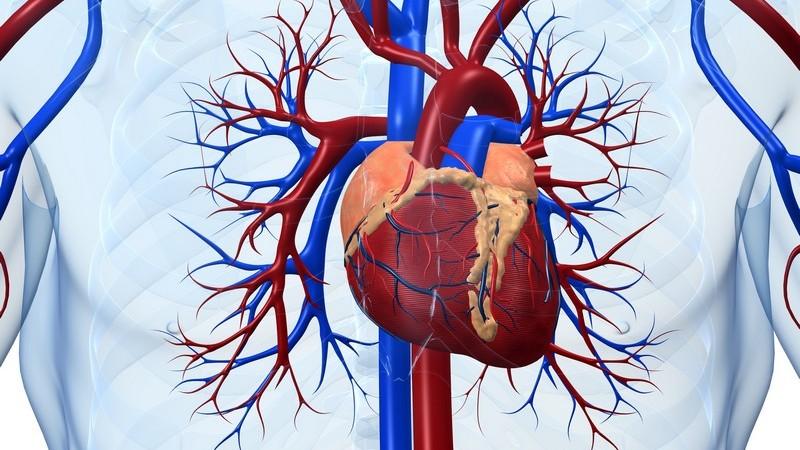 Bei den meisten minimal-invasiven Eingriffen am Herzen handelt es sich um Bypass-Operationen