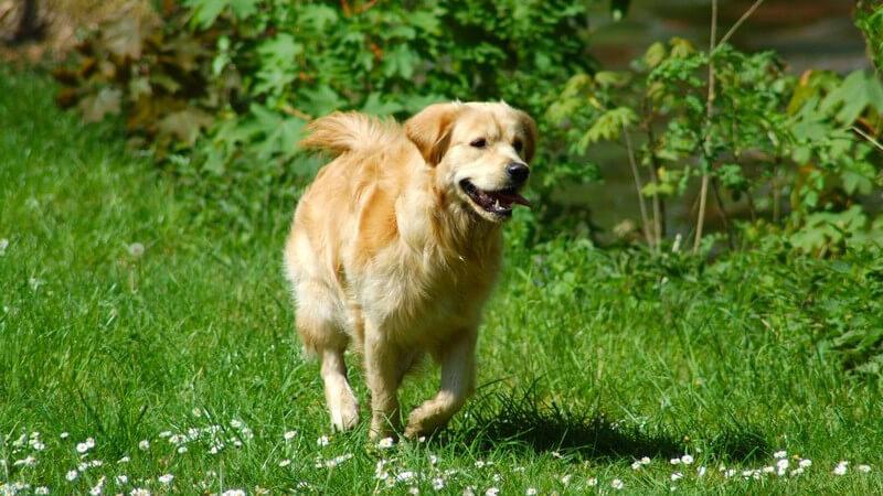 Katzen und Hunde kommen des Öfteren mit Gebüschen oder hohem Gras in Berührung und genau dort lauern die Zecken