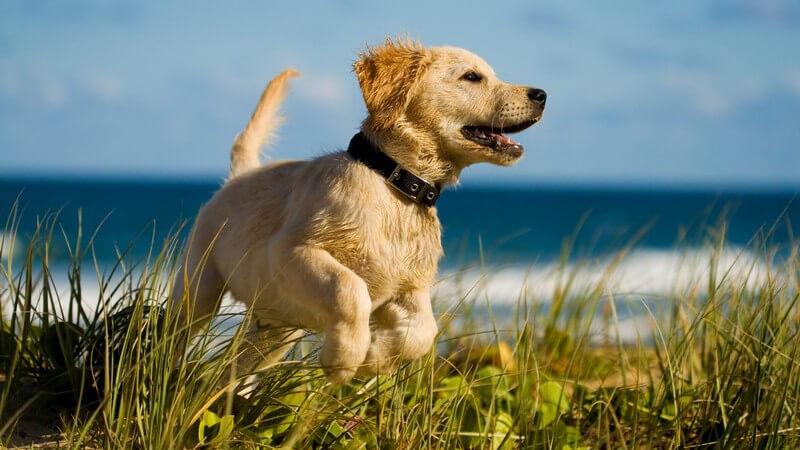 Für jeden Typ gibt es den passenden Hund - er ist bester Freund, Sportkamerad und kann mit vielen weiteren Vorzügen punkten