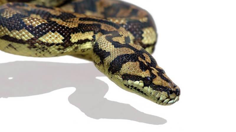 Hin und wieder können Haustiere erkranken; dies gilt auch für Tiere in Terrarien - Wir geben einen Überblick über mögliche Krankheiten bei Reptilien