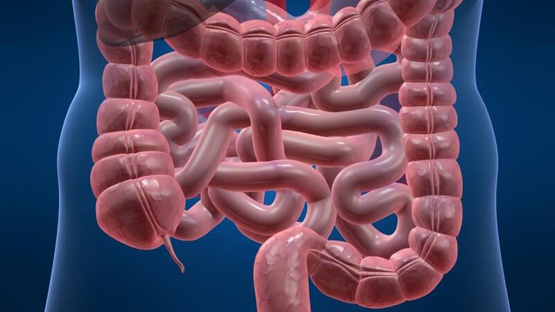 Eine Schwächung des körpereigenen Abwehrsystems kann zu einer Ausbreitung des Darmpilzes Candida albicans führen