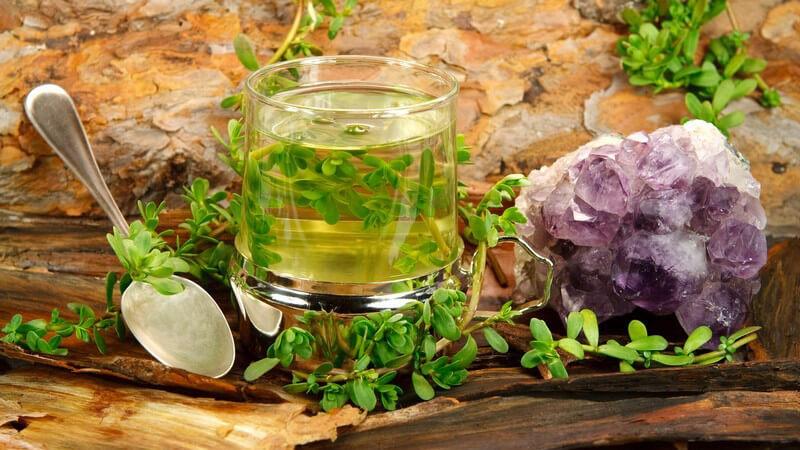 Die recht unscheinbare Zimmerpflanze Brahmi, auch kleines Fettblatt oder Feenkraut genannt, kann in Form von Tees oder Tinkturen eine heilende Wirkung entfalten