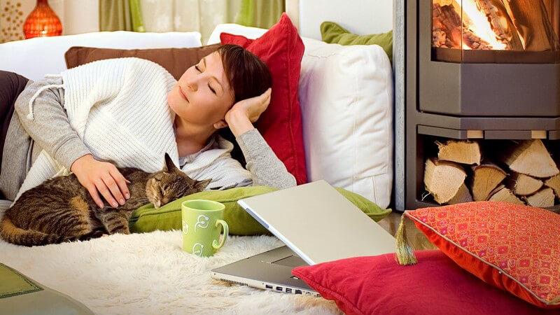 Haare, Geruch und Schmutz von Katze und Hund vom Teppich entfernen