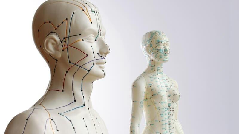 Die verschiedenen Wandlungsphasen der chinesischen Medizin und weitere Bestandteile