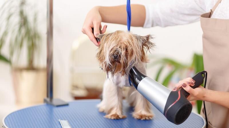 In manchen Fällen ist es unvermeidlich, den Hund zu baden - Diese und andere Wellnessanwendungen werden mittlerweile auch von speziellen Hotels angeboten