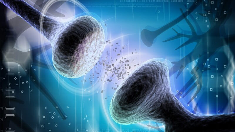 Wissenswertes zu Zellhormonen