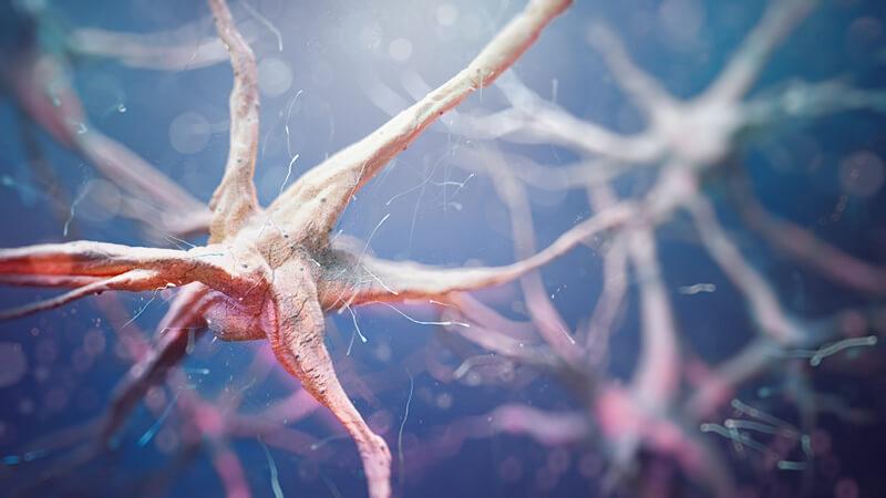 Man unterscheidet unipolare, bipolare, pseudounipolare und multipolare Neuronen