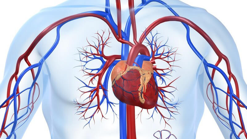 "HDL gilt als ""schlechtes"" Cholesterin"