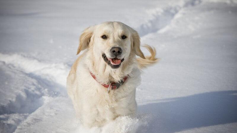 Wir geben Tipps, um z.B. streunenden Katzen über den Winter zu helfen, trockene Hundeohren im Winter zu behandeln oder Haustieren die Sommerhitze so angenehm wie möglich zu machen