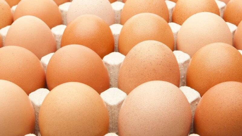 Wissenwertes über Eier
