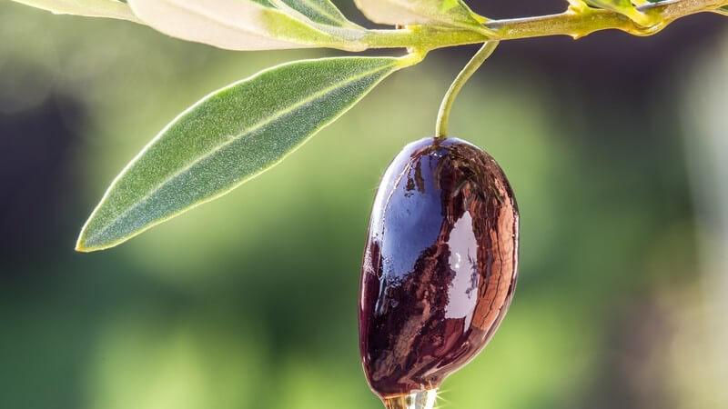 Pflanzliche Öle werden in der Küche vielseitig verwendet - wir stellen die beliebtesten Öle vor, wie etwa Kürbiskernöl, Leinöl, Olivenöl, Rapsöl oder Walnussöl