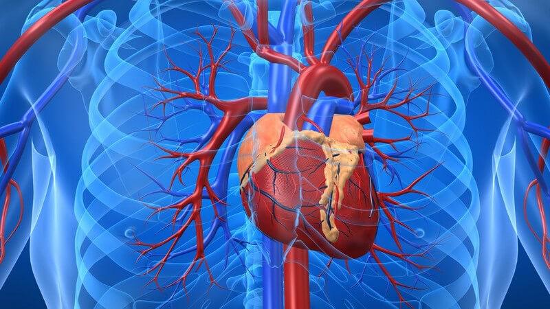 Wissenswertes zu Herzenzymen