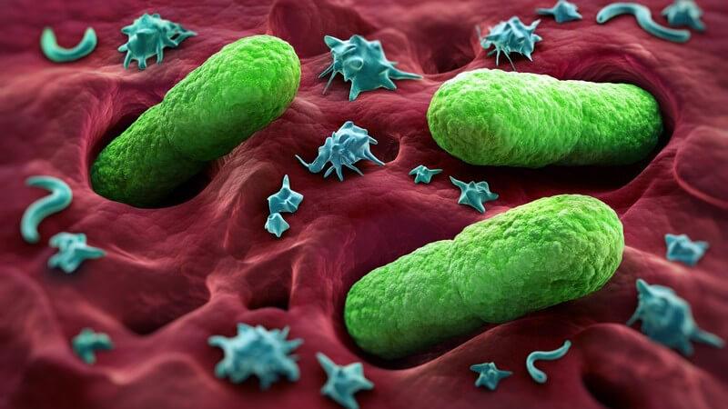 Die Entstehung der Pest und wie man sie erkennen und behandeln kann - Man unterscheidet die Beulenpest (Bubonenpest), die Pestsepsis, die Lungenpest und die abortive Pest