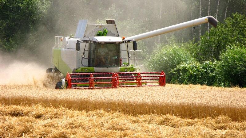 Für die Herstellung von Vollkornmehl und Vollkornschrot werden mitunter Getreidearten wie Weizen, Dinkel oder Roggen verwendet - man macht daraus Nahrungsmittel oder Tierfutter
