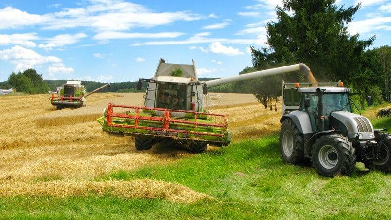 Nützliche Informationen zu Weizen, Roggen, Gerste, Hirse und Co