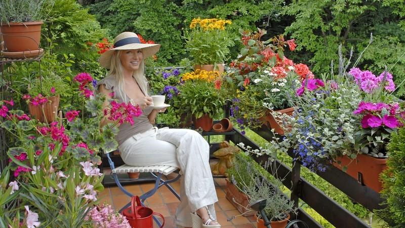 Kletterpflanzen kann man auch in einem Kübel einpflanzen - somit hat man auch auf dem Balkon die Möglichkeit, für einen natürlichen und dekorativen Sichtschutz zu sorgen