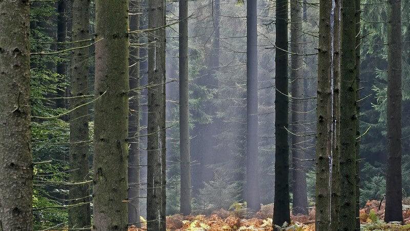 Von Ahorn bis Zypresse - Ein Überblick über die unterschiedlichen Arten von Bäumen sowie deren Nutzungsmöglichkeiten