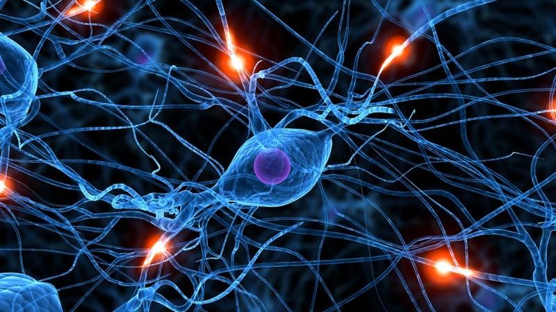 Man unterscheidet chemische, elektrische, erregende sowie hemmende Synapsen