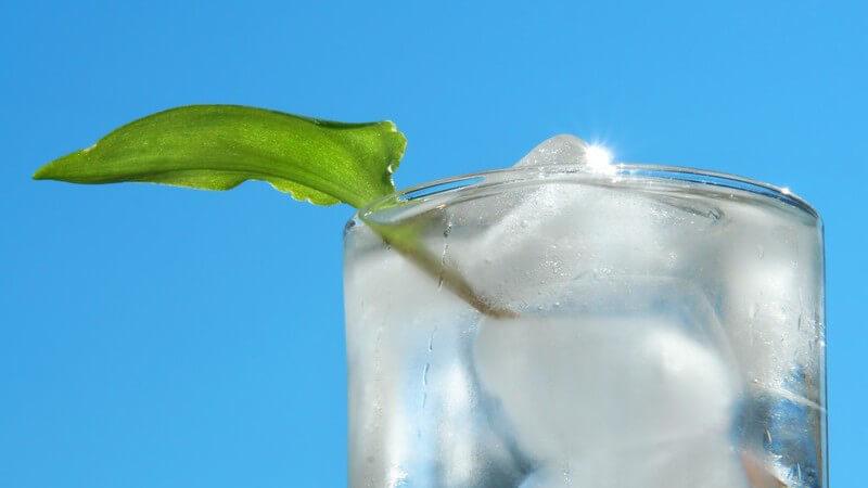 Schwangere und stillende Frauen sollten aufgrund des enthaltenen Chinins auf das Getränk verzichten