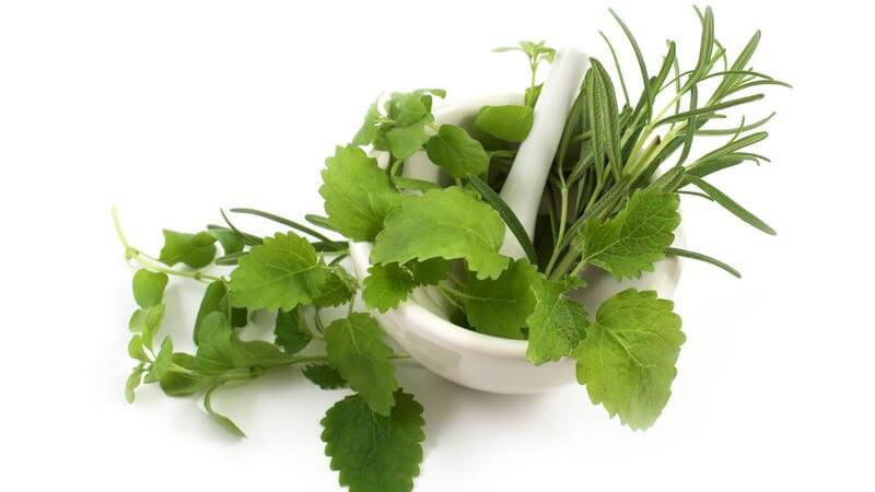 Hilfreich ist die Kräutermischung mitunter bei Appetitosigkeit, Erkältungen, Hexenschuss oder Zahnfleischentzündungen