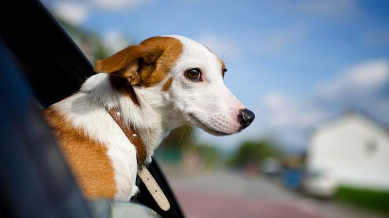 Hundefänger bieten Hilfe, wenn ein Hund entlaufen ist - sie arbeiten mit Tierheimen, Ämtern sowie der Polizei zusammen