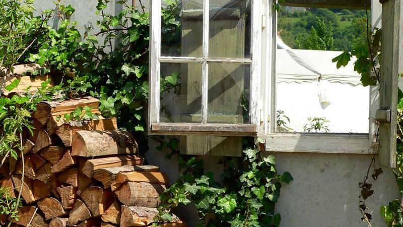 Kletterpflanzen sind vielseitig einsetzbar und erfreuen sich großer Beliebtheit - bei der Auswahl als Fassadenbegrünung sollte man ein paar Punkte beachten; es gibt auch Nachteile