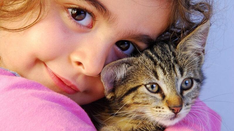 Zu den möglichen Auslösern von Blähungen bei Katzen zählen mitunter eine falsche oder minderwertige Nahrung, zu viele Milchprodukte, Bewegungsmangel oder zu schnelles Fressen