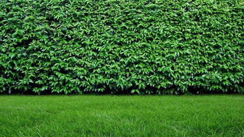 Ein Rasen erfüllt verschiedene Zwecke und wird unterschiedlich genutzt - als Spielfläche für Kinder, als einfache Landschaftsfläche oder als Dekoration