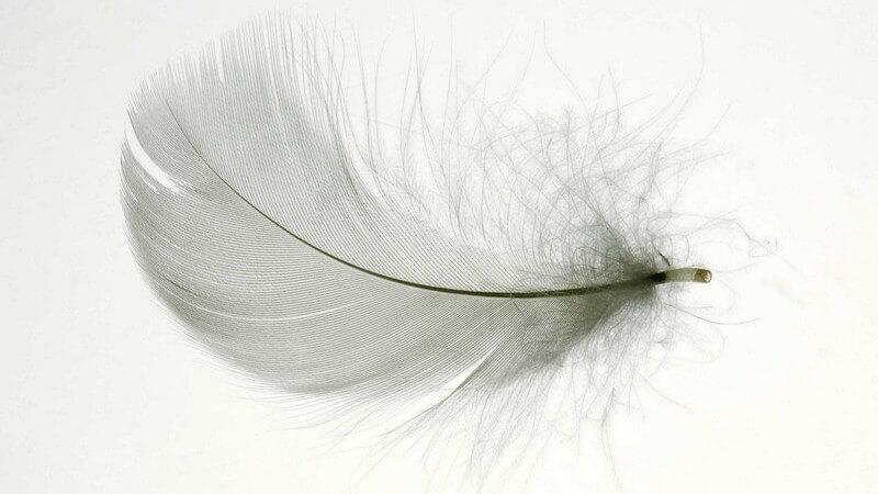 Wer seine Haare zum Hingucker machen möchte, sollte sich Feder-Extensions oder Extensions in knalligen Farben anschaffen