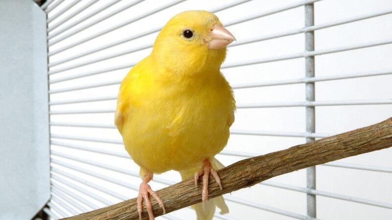 Eine Überempfindlichkeit gegen Vogelstaub kann zu einer Hühnerei-Allergie führen.
