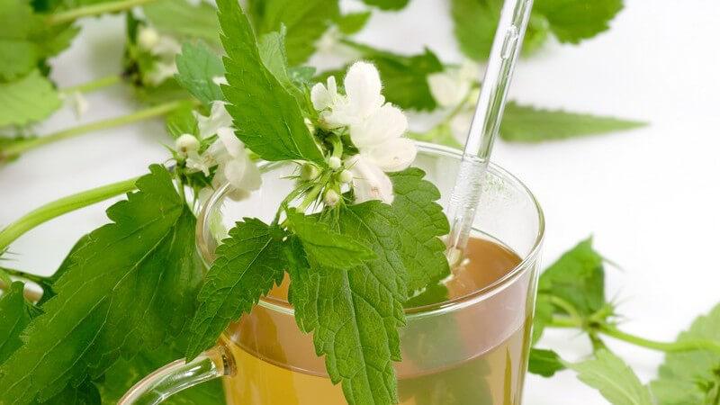 Als entzündungshemmende Hausmittel gelten mitunter Ringelblume, Kamille, Hafer und Basilikum - besonders wirksam ist  auch Bienenharz