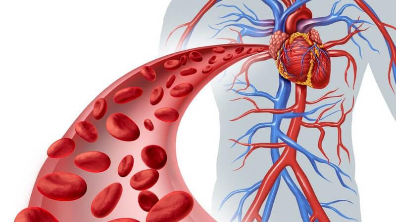 Informationen zum Säure-Basen-Haushalt, eine Übersicht der pH-Werte unserer Körperflüssigkeiten und Organe und Tipps zur Vermeidung und Behandlung einer Übersäuerung