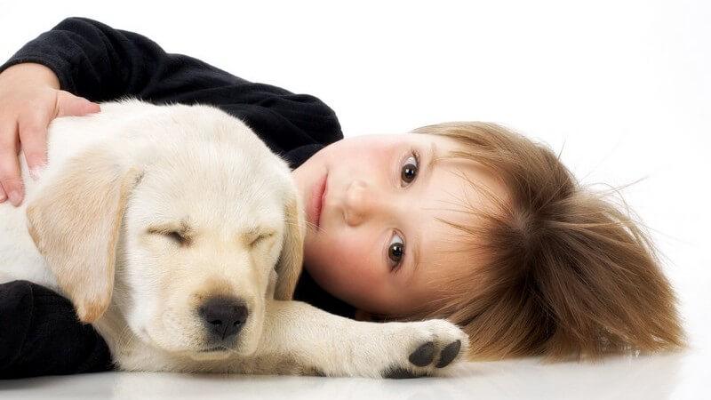 Haustiere als eine gute Stütze - Die Vorzüge von Haustieren und was vor der Anschaffung beachtet werden sollte