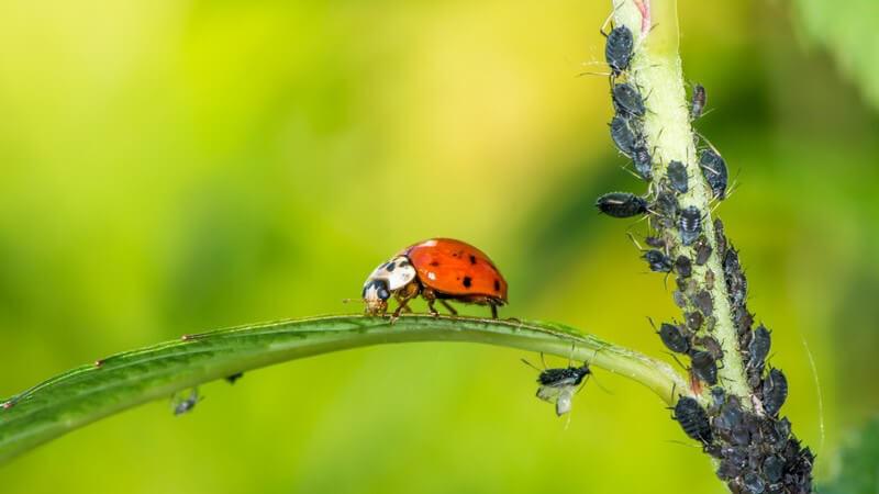 Schädlinge können zu Schäden an Nahrungsmitteln, Pflanzen oder Textilien führen - mitunter sind sie auch schädlich für die menschliche Gesundheit