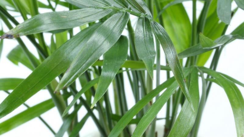 Zimmerpflanzen verschönern jedes Zuhause - damit sie gesund bleiben und kräftig wachsen, sollte man einige Pflegehinweise beachten