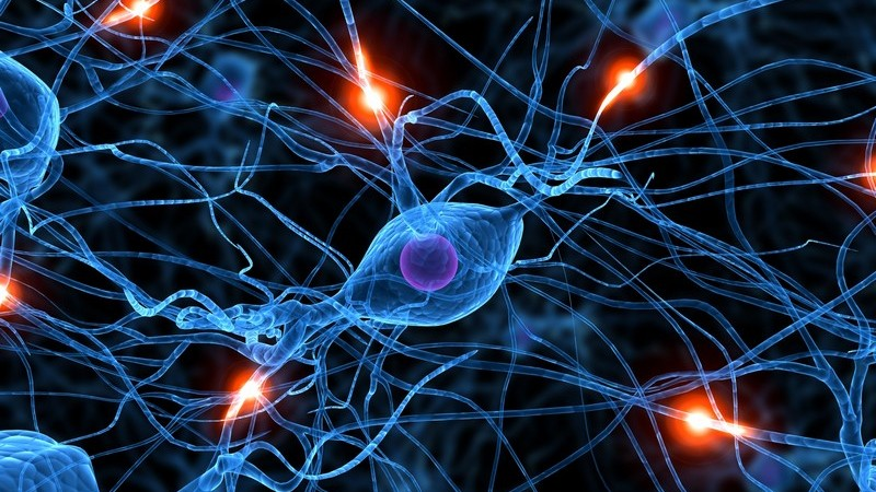 Bei Schmerzen handelt es sich um eine Reaktion von so genannten Nozizeptoren auf verschiedene Reize