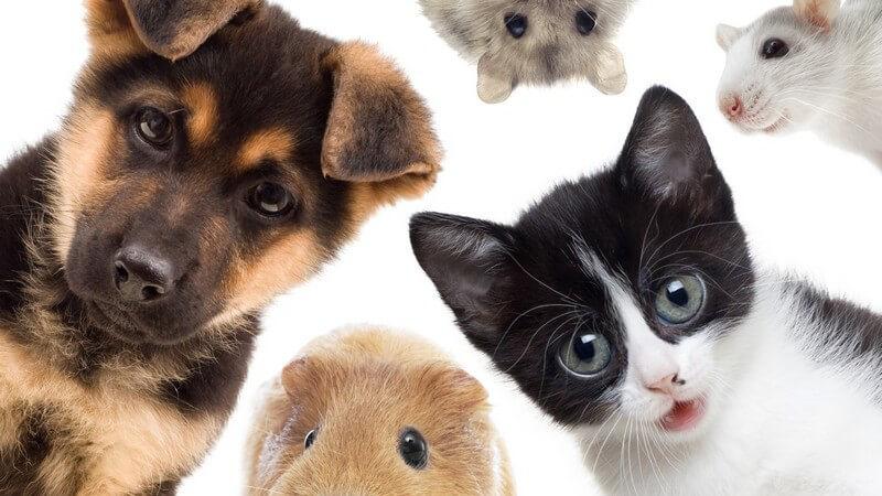 Viele zukünftige Haustierhalter stellen sich die Frage, welches Tier denn wohl die passende Wahl wäre - Wir geben Hilfestellung und zeigen, welches Tier zu welchem Halter passt