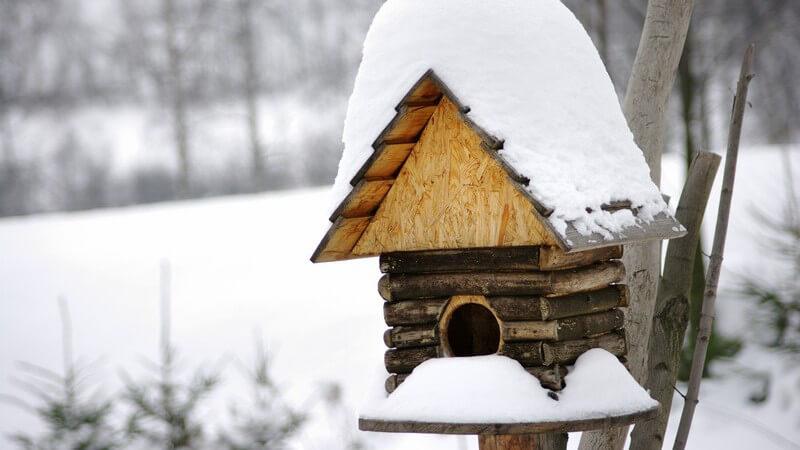 Man kann Vögel dadurch helfen, dass man ihnen Bruthilfen zur Verfügung stellt sowie Futter, welches in der kalten Jahreszeit schonmal knapp werden kann