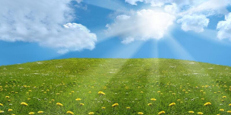 Im Sommer kommt es besonders auf die richtige Bewässerung des Gartens an - sowohl von der Menge, als auch vom Zeitpunkt her