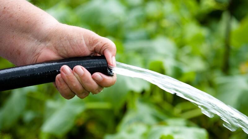 Um Algen im Gartenschlauch zu vermeiden, sollte dieser stets vom Restwasser befreit werden - auch eine hängende Aufbewahrung kann helfen