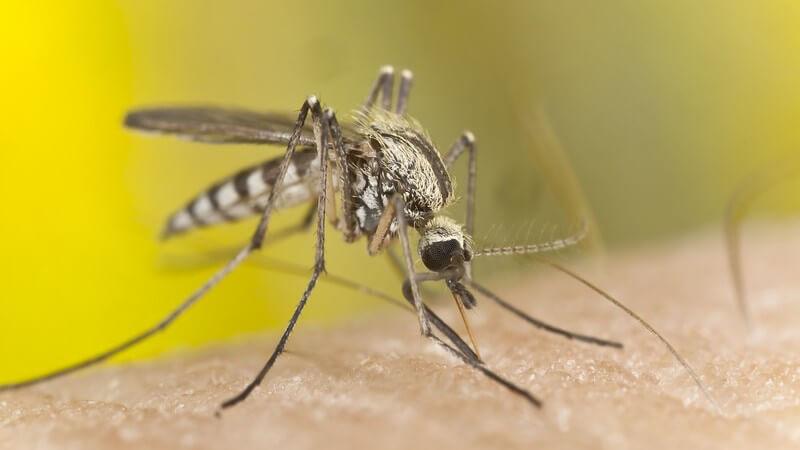 Die Infektion mit dem Zikavirus ist besonders für alte und schwangere Menschen eine Gefahr