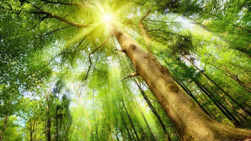 """Die aus Japan beliebte Entspannungsmethode des """"Waldbadens"""" wird jetzt auch in Deutschland populär"""