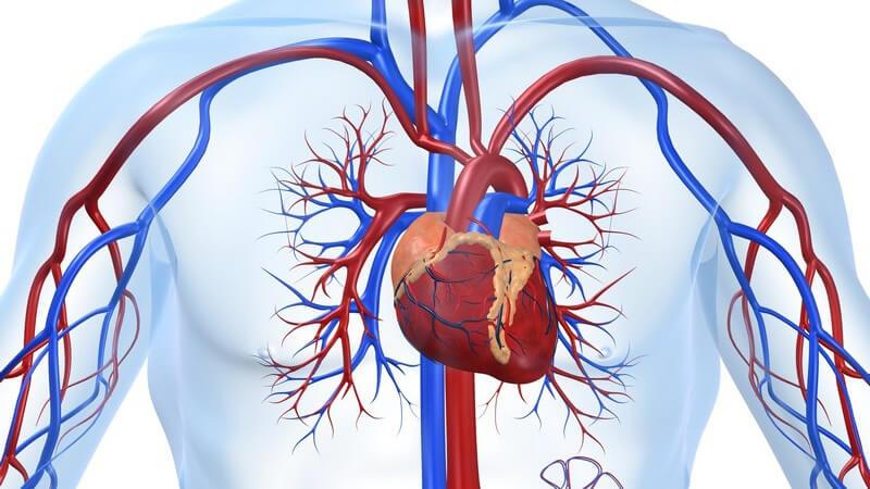 Verlangsamter Herzschlag mit einer Herzfrequenz von weniger als 60 Schlägen pro Minute
