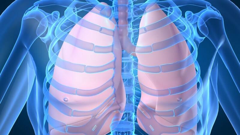 Der Lungenegel Paragonimus westermani verursacht beim Menschen eine Paragonimiasis