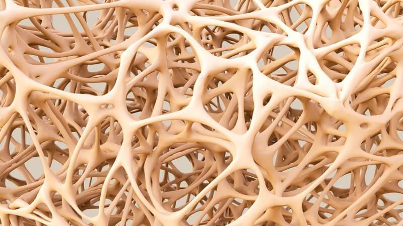 Destabilisierung der Knochen durch Störung des Knochenstoffwechsels