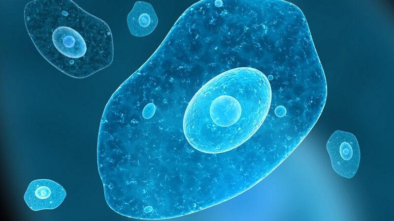 Parasitäre Infektion mit dem Erreger Entamoeba histolytica